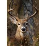 Buck Deer Head